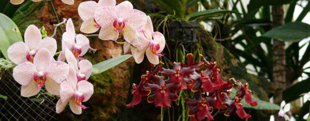 Орхидеив парке «Утопия»