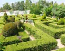 Plant Mazes
